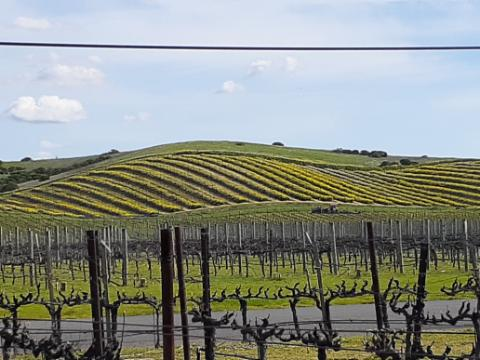 Napa Valley Wine Tours